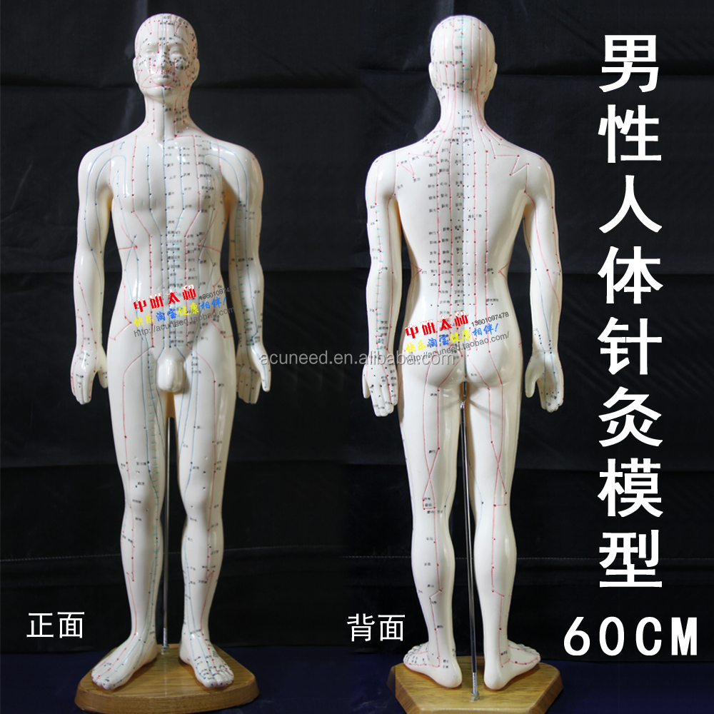 Chinese body model for acupuncture meridian and extraordinary points 60cm /Human body acupuncture point model
