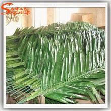 Decorative land betel leaves price botanical names of leaves