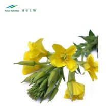 Evening Primrose Seed Oil, Evening Primrose Seed Extract GLA, Natural Evening Primrose Seed Oil with Best Quality