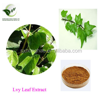 Lvy Extract Hederagenin 10% Hedera Helix Leaf Extract 10:1