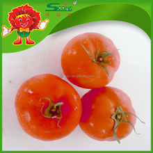 organic fresh tomatoes cheap price Wholesale best tomatoes from Yunnan