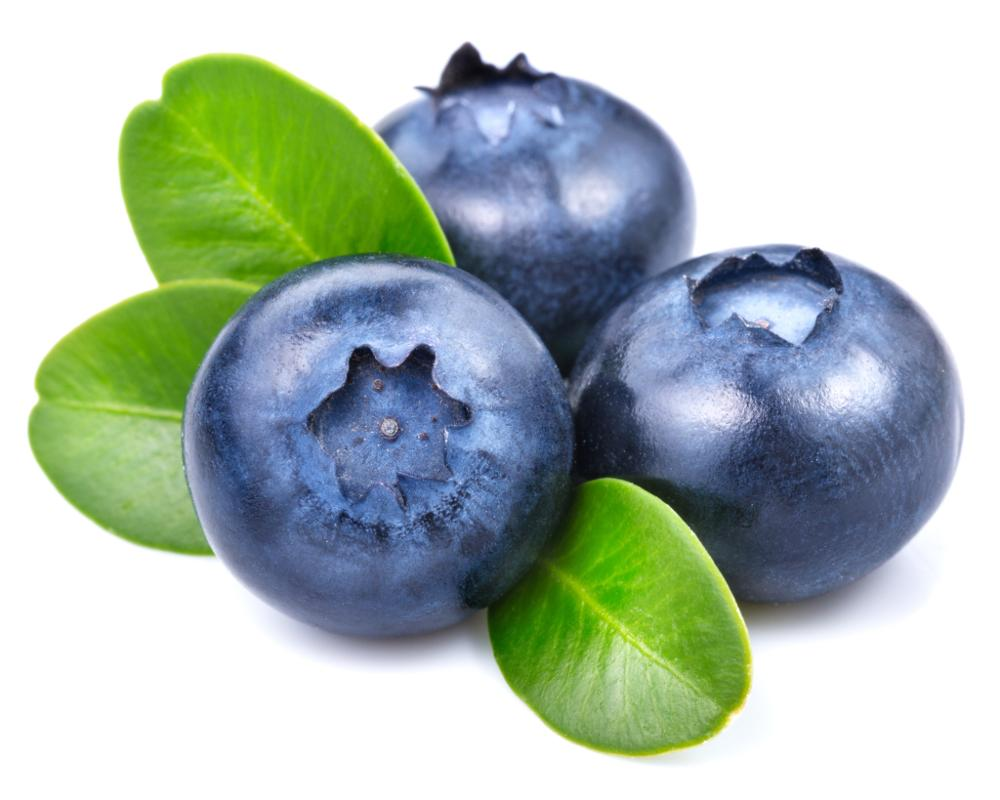 China Suppliers Blueberry Extract Powder Anthocyanidins 10:1 in bulk