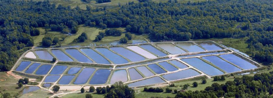Fish Farm Plastic Polyethylene Sheet Lowes Geomembrane Ponds Liner Buy Fish Farm Geomembrane
