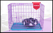 Folding iron wire dog cages with divider