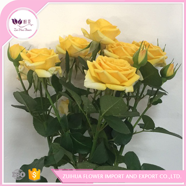 hot sale & high quality fresh cut spray rose for floral dealer