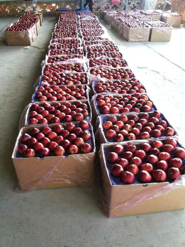 Fresh fruit red huaniu apple from Tian shui