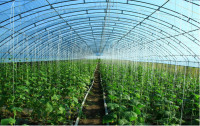 first grade cheap high quality 200 micron plastic film for greenhouse with uv protection