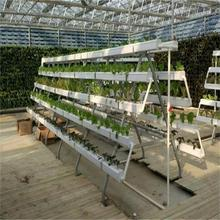 Greenhouse Hydroponics NFT system for agriculture