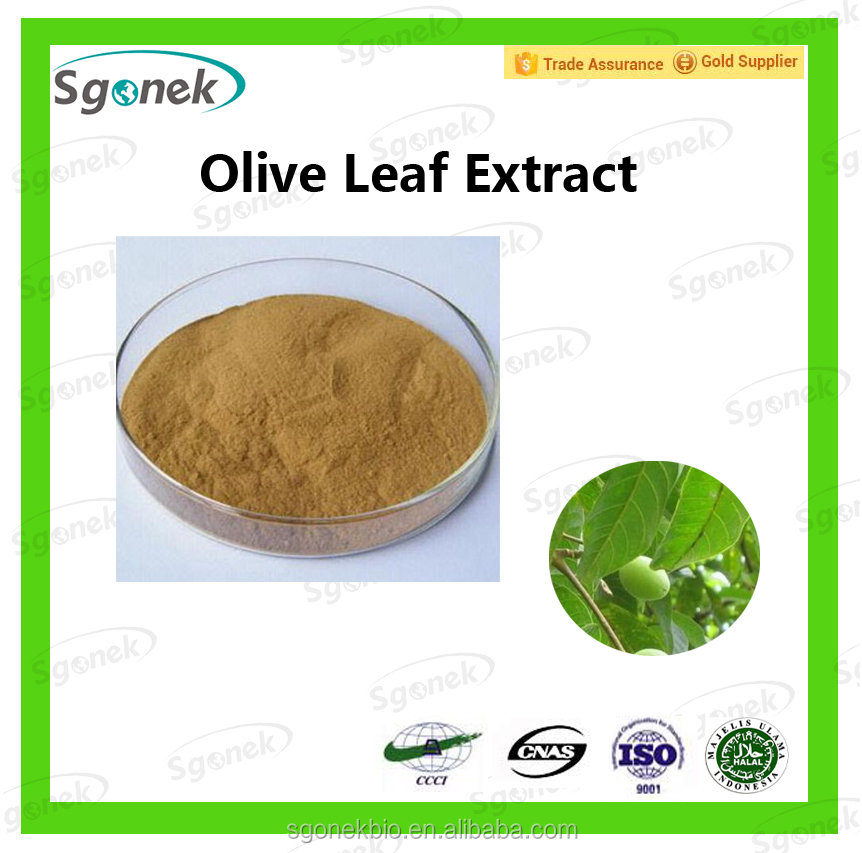 Pure New Product Olive Leaf Extract with Oleuropein/ Hydroxytyrosol