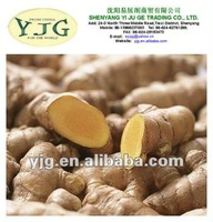 New Crops Fresh Yellow Ginger