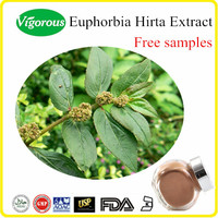 China Manufacturer high quality Euphorbia Hirta extract powder, Asthma Weed Extract