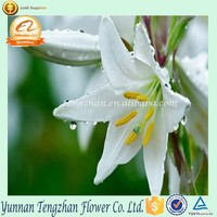 Most popular white affordable lily flowers