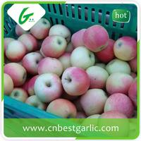 Fresh royal organic sweet gala apple
