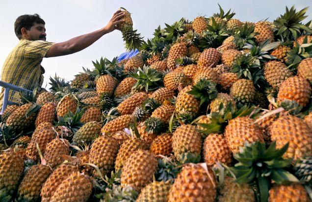 Sri Lankan Ripe Quality Pineapples