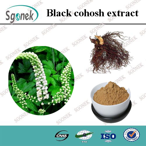 Top Quality Organic Black Cohosh extract