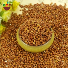 Chinese supplier organic bulk red sorghum grain seed for sale