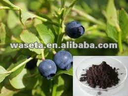Bilberry Extract, vaccinium myrtillus, Anthocyanidins 25% UV