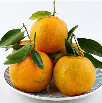 Chinese fresh mandarine  orange for canned mandarin orange
