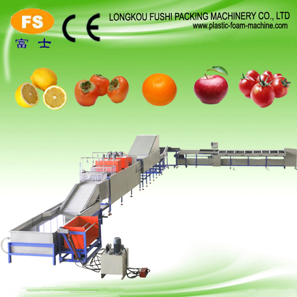 Fruit & Vegetable Cleaning and Drying Machine