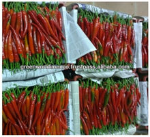 FRESH BIG RED CHILI VERY GOOD PRICE