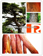 factory supply high quality Pine Bark Extract powder,Pinus massoniana Lamb extract