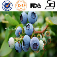 Food additives super water soluble antioxidant of Bilberry extract