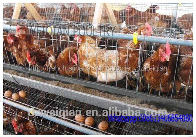 Meilleur prix batterie poules pondeuses cages cage for Prix des poules pondeuses