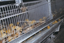 Pullets raising cage for poultry farming equipment turnkey project