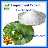 High Quality Loquat Leaf P.E.
