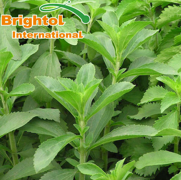 Pure nature Stevia plant extract with free sample