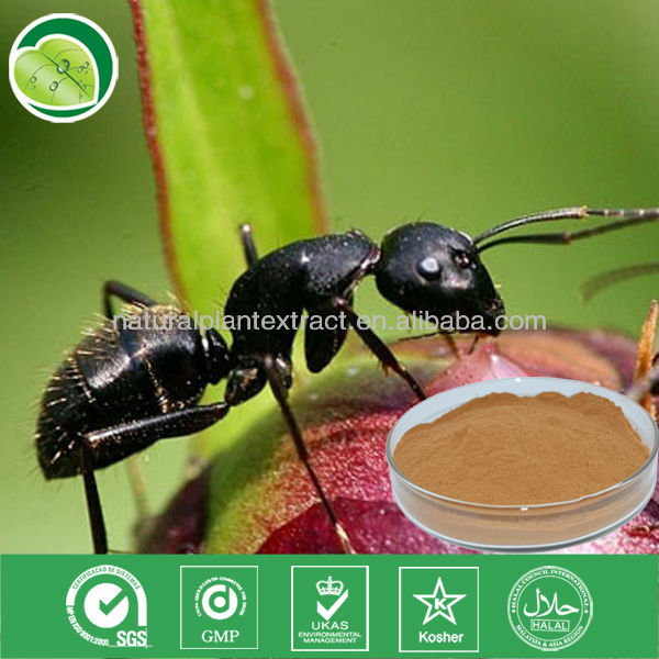 hot sell 20:1 black polyrhachis ant extract powder ant extract