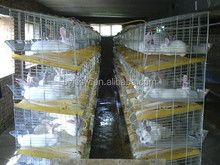 Best Galvanized Rabbit Cage in Kenya Farm