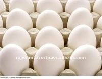 White poultry eggs from india