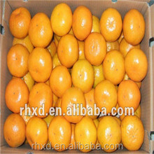 2017 juicy fresh Navel orange/quince fruits for sale