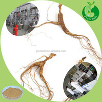Korean red ginseng extract gold ginsenoside powder