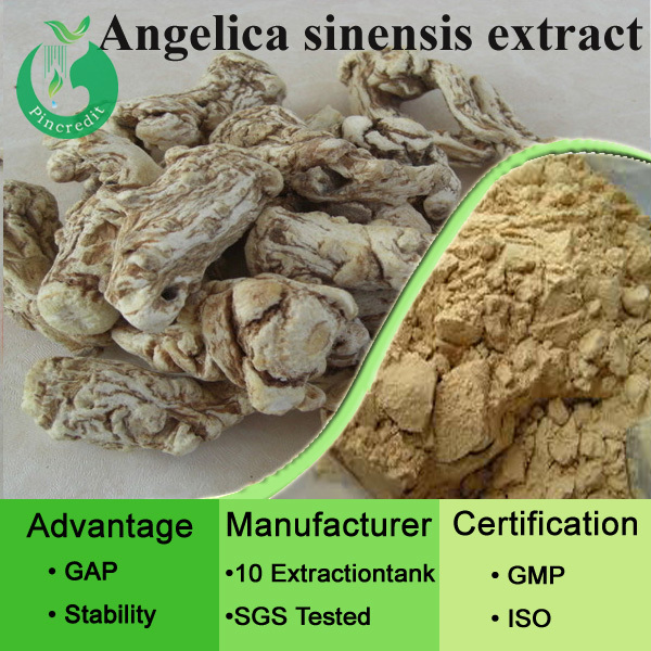 Pure Natural Chinese Angelica Extract Angelica Sinensis Root Powder