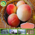 100% water soluble peach fruit powder drink