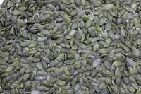 Snow white Pumpkin seeds in shell/Dark green Pumpkin seeds grown without shell grade A AA AAA GWS UNSALTED