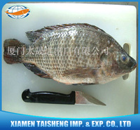 Tilapia (Red and Black) Whole Round products