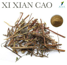 Chinese Herb Extract Xi Xian Cao Extract Powder as Herbal Supplements Ingredients
