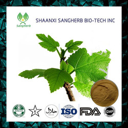 100% Natural fig leaf extract 5%-20% Isoflavone fig leaf P.E./ Fig leaf extract powder on hot selling