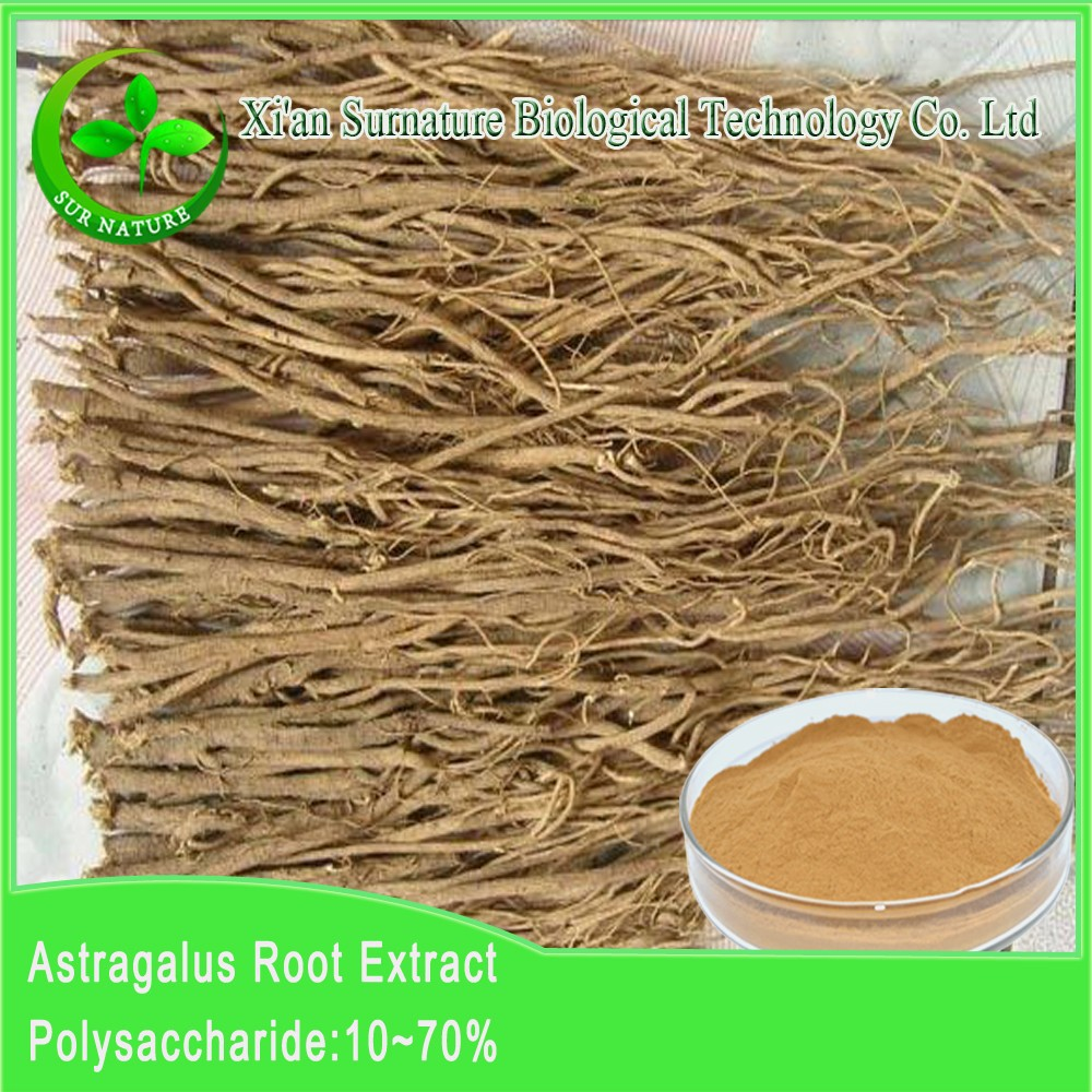 high quality astragalus extract powder from astragalus root at factory price