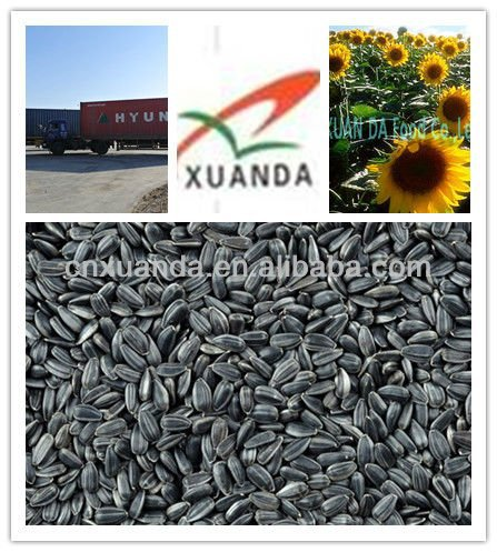 black wholesale sunflower seeds for oil