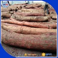 Padauk wood logs and padauk round logs for sale