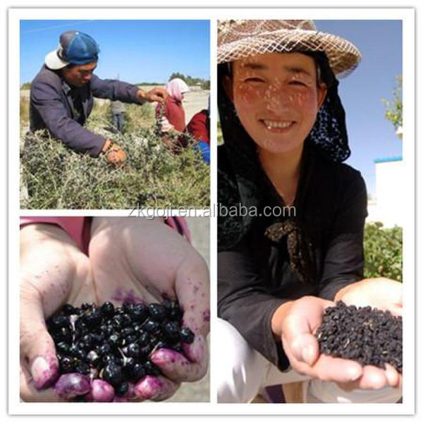 Superfruit goji berry fruit chinese black wolfberry top quality wild natural dried black goji berry