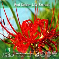Red spider lily Extract Powder (98% Galanthamine) supplied by 3W Exporter