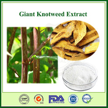 Giant Knotweed Extract 98% Resveratrol 98% Polydatin