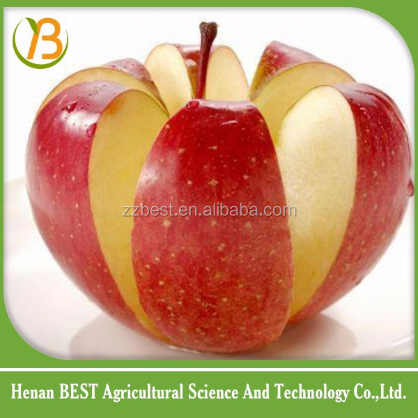 good quality apple fruit hot sale