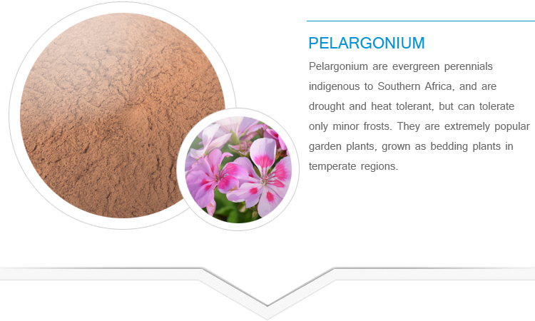 Top quality Free Sample Pelargonium hortorum extract pure Dmaa powder