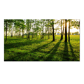 Landscape Canvas Print Art/Home Decoration Sunshine Canvas Art Forest/Green Trees Wholesale Stretched Canvas